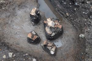 弥生時代中期の土坑(SK1)から出土した土器