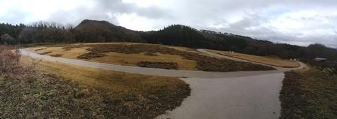 イノシシに芝生が掘り返されて土がむき出しになっているようす