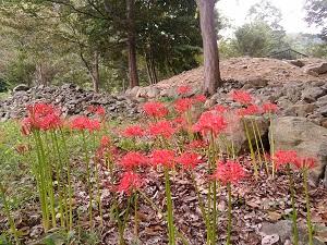 古墳の傍らに咲くヒガンバナ