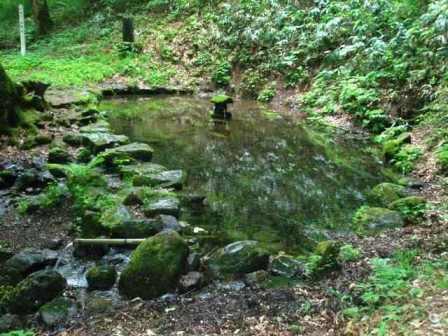 樋知大神社境内の社叢及び湿生植物群落